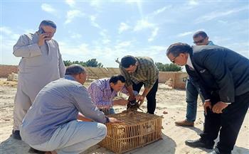 آخر أخبار مصر اليوم الأربعاء 20- 10 – 2021 فترة الظهيرة.. حملات لمكافحة الصيد غير المشروع للطيور المهاجرة