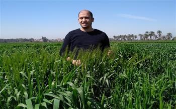 الدكتور أحمد القط  عضو مركز «البحوث الزراعية» يكشف تفاصيل استنباط أصناف جديدة من القمح (حوار)