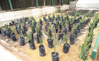 يوفر 125 ألف شتلة لـ4 محاصيل استراتيجية.. كل ما تريد معرفته عن معمل زراعة الأنسجة