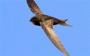 ما هو طير الأبابيل؟