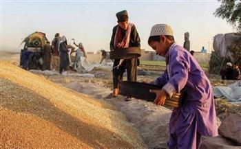 """""""طالبان"""" تعلن برنامج """"العمل مقابل القمح"""" لمواجهة البطالة"""