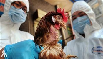 """تسجيل ثلاث إصابات بسلالة """"H5N6"""" عالية العدوى من """"إنفلونزا الطيور"""" في الصين"""