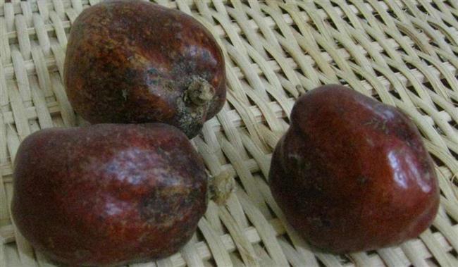 أبرزها حرق الدهون ومحاربة التجاعيد.. 10 فوائد مذهلة لفاكهة الدوم