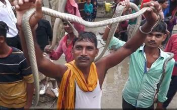 «مهرجان الأفاعي» يكشف طقوسا غريبة بالهند .. فيديو
