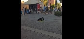 شاهد.. كلب متسول يجمع الأموال من المارة بحركات ذكية فى قلب اليونان