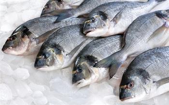 ارتفاع البلطي.. أسعار الأسماك اليوم 2-8-2021