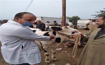 بيطري الغربية: إقامة سوق مواشي بطنطا